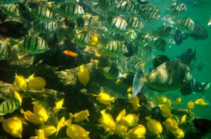 Hawaii Fish